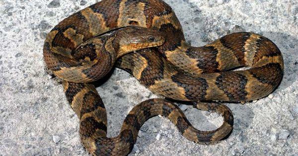 Common Kentucky Snakes...