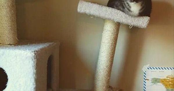 Funny animals - lol cats - fat cat