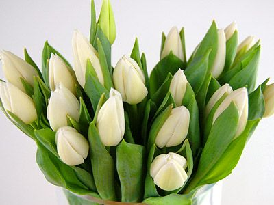Send 20 White Tulips For Uk Flower Delivery From Clare Florist Types Of White Flowers White Tulips Flower Delivery