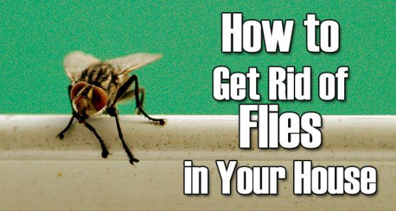 Home Remedies To Get Flies Off Dogs