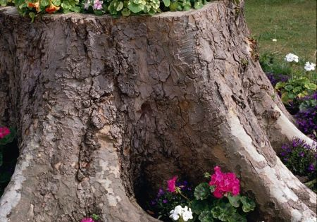 Old tree stump used as a flower pot