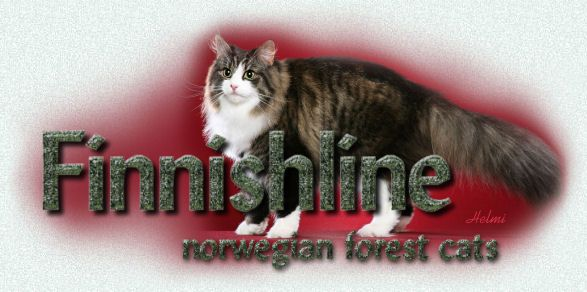 Norwegian Forest Cats And Kittens From Finnishline Ny Norwegian Forest Cat Breeders Norwegian Forest Cat Forest Cat