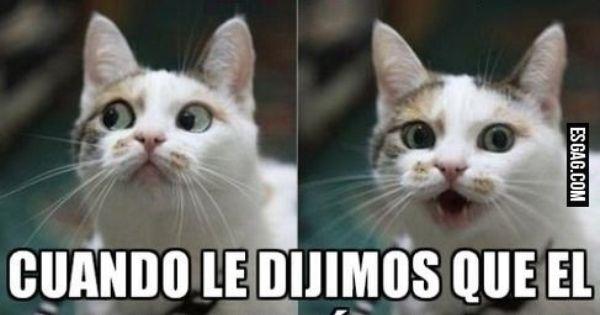 Pin De Day Z Flower Em Dichos Frases Bobas Memes Em Espanhol Frases