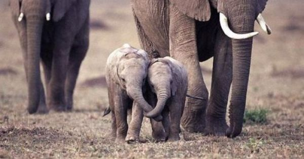 young love. The cutest baby elephants!