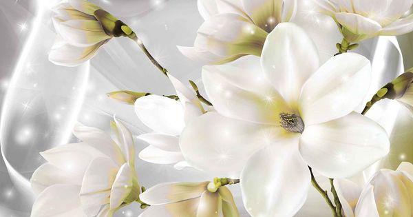 White Rose ورد أبيض Fototapete Wandbild Wand Weisse Blumen