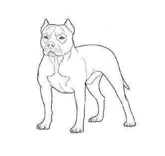 Pitbull Malvorlagen Kostenlose Ausmalbilder Malvorlagen Pitbull Hunde Tiere Vorlagen