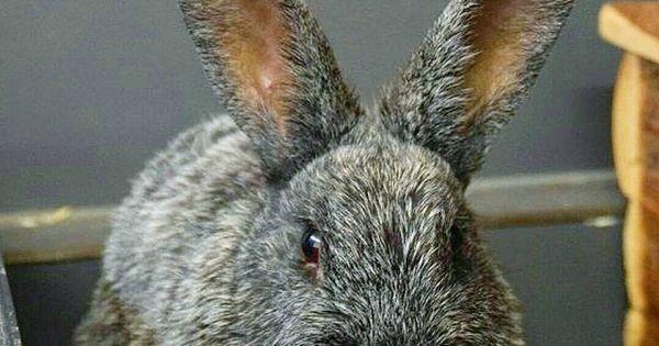Hallo Ich Bin Kaninchendame Yuma Leider Bin Ich Aus Der Vermittlung Wieder Zuruck Ins Tierheim Burgdorf Gekommen Weil Die Vergesellschaftung Nicht In 2020 Animals