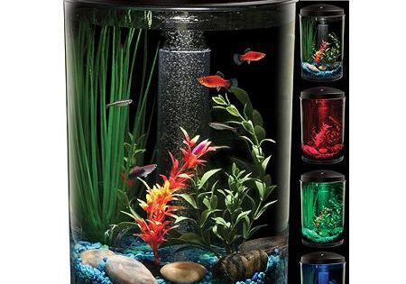 Hawkeye 3 gallon 360 starter aquarium kit with led for How much are betta fish at walmart