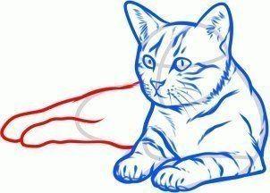Katze Zeichnen Lernen Schritt Fur Schritt Tutorial Mit