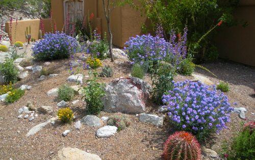 Delicieux Desert Garden Design Photos Photograph 45876 | Desert Landsc   Backyard  Bliss | Pinterest   Tuinen, Musea En Toetjes