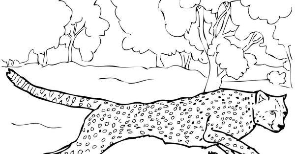 gepard ausmalbilder 02  mandala  pinterest