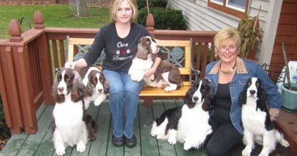 Ocoee English Springer Spaniel Puppies English Springer Spaniel Puppy Spaniel Puppies Spaniel