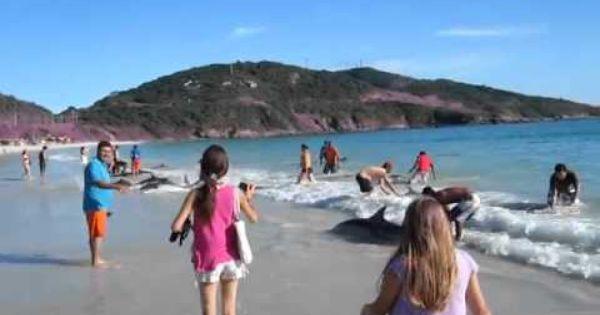 Elcomercio Pe Player 1384898 Youtube Dolphins Beach How To Memorize Things