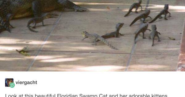 Floridian Swamp Cat Tumblr Pinterest Happy Kittens