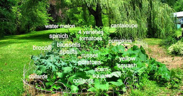 Pin Auf Homesteading Self Sufficiency