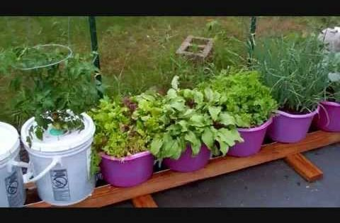 New improvements to the self watering rain gutter grow system grow baby grow garden - Self watering container gardening system ...
