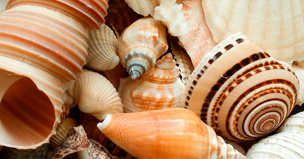 Seasoned Beachcombers And Shelling Connoisseurs Know That The Outer Banks Of North Carolina Is