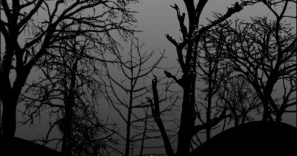 Dead Trees Brush Photoshop Freebies Tree Photoshop