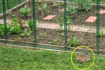 Garden Fence Deer Protection System Fenced Vegetable Garden Diy
