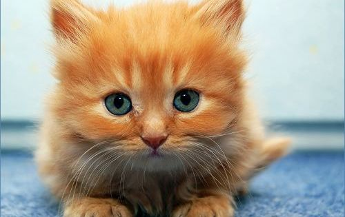 Our third pets were orange kittens just like this one we found