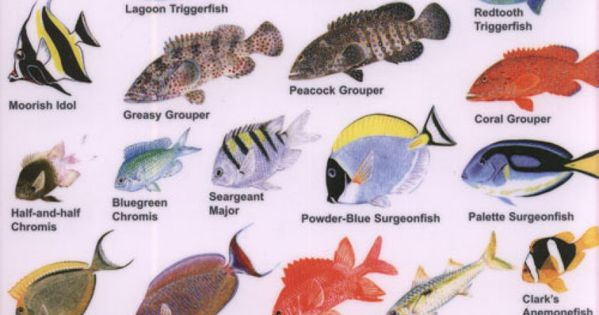 Indian Ocean Fish | Guide to Reef Fish of the Indian Ocean ...