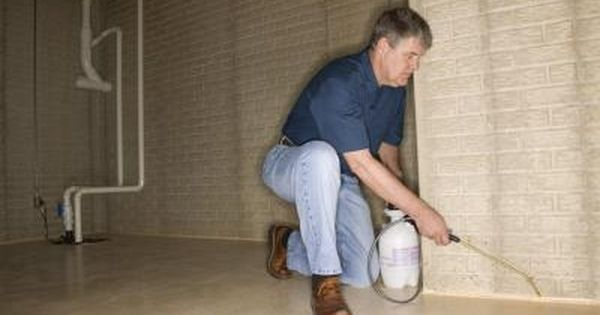 How to clean mold off basement concrete walls pinterest for Basement concrete cleaner
