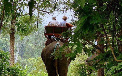 Ride an elephant!!! Jungle Trek - Chiang Mai, Thailand by Butch Osborne,