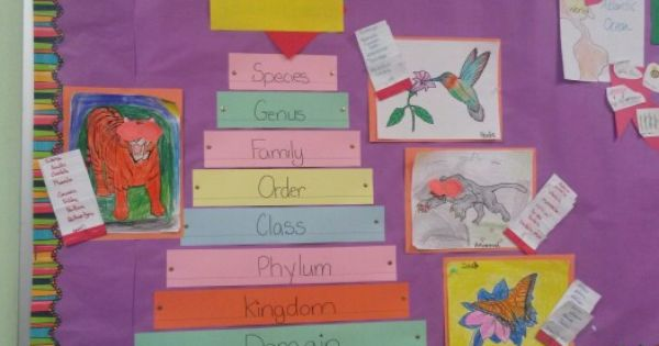 Animal classification, 5th grade science and 5th grades on Pinterest
