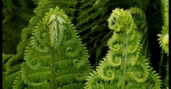 beautiful fern garden from the garden to the table