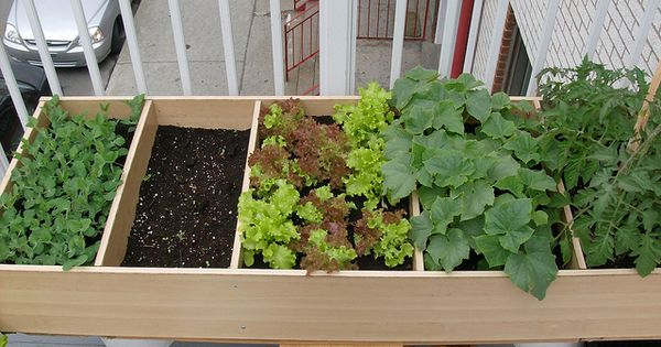 Use an old bookcase as a frame for a raised bed- herb