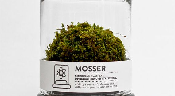 Moss in a glass jar. Perfect with minimalist design for any home