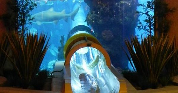 There's an aquarium with a water slide that goes through a shark