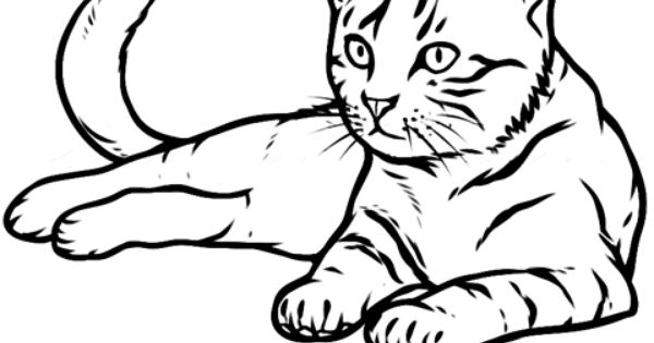 cat coloring pages realistic cat - photo#45