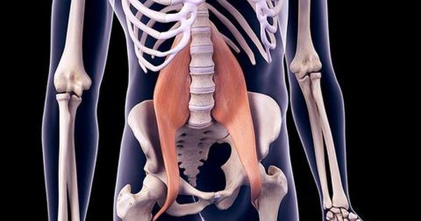 15+ Where is the psoas muscle located ideas