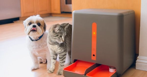 Pin By Vera Ramazanova On Ins Pet Feeder Automatic Cat Feeder Pets