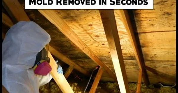 Remove Mold In 15 Seconds See How Mold Remover Remove Mold Stains Get Rid Of Mold