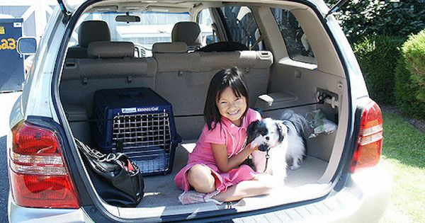 how to get anxious scared or motion sick dogs used to riding in the car dog sick dog and. Black Bedroom Furniture Sets. Home Design Ideas