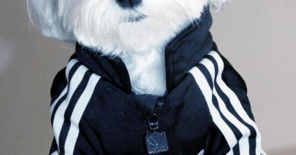 My kind of Doggie ..Rocky x Adidas cutest! Puppy Pets