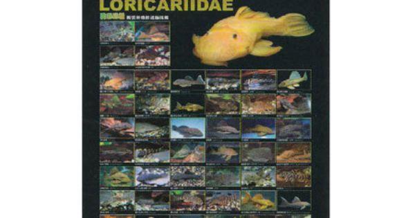 Pleco Poster Azoo Loricariidae Poster Pleco Fish Freshwater Aquarium Fish Poster