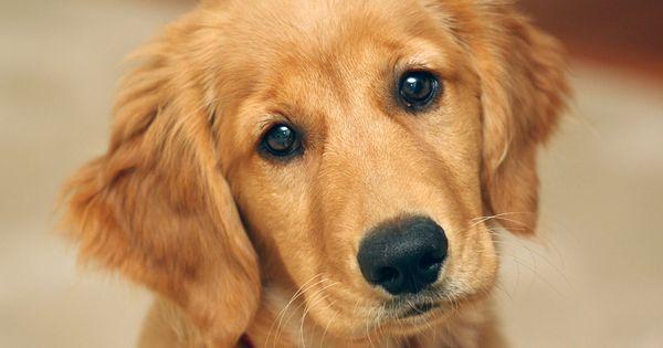 7ee3fc8f02441ad86fcafa66406fcb12 Jpg 768 480 Cute Puppy Wallpaper Cute Baby Dogs Cute Dog Wallpaper