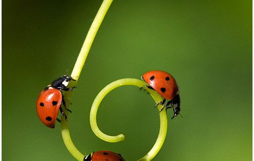 Animal crackers. Beautiful! Ladybug, ladybug, ladybug!