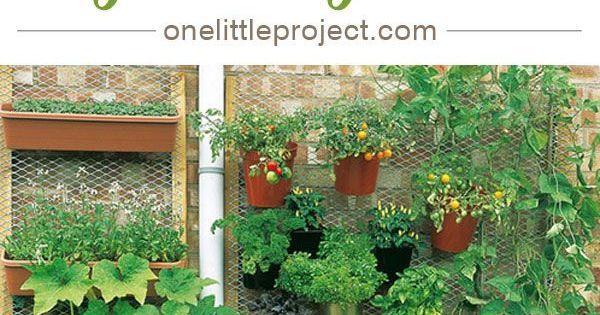 15 unusual vegetable garden ideas gardens vegetables for Unique vegetable garden ideas