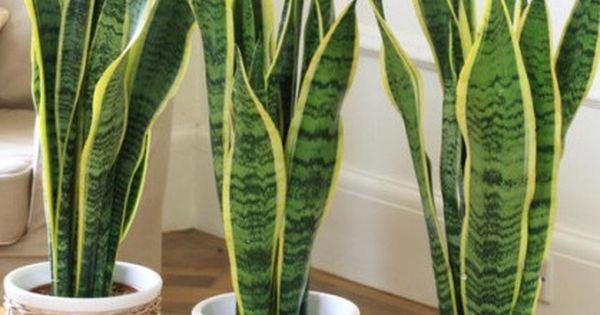 Plantas de interior para purificar los ambientes for Plantas de purificacion