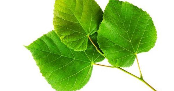 tratament cu plante de artroză)