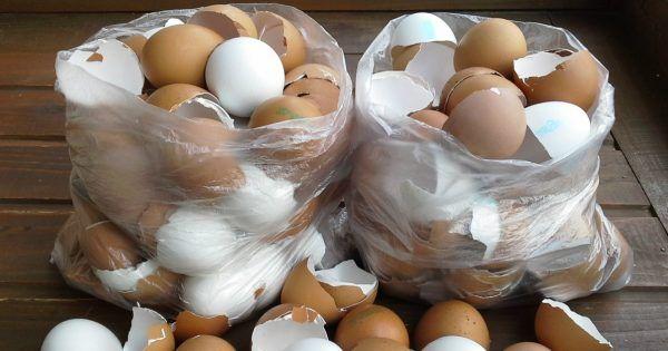Žena přestala vyhazovat vaječné skořápky a začala z nich vytvářet něco  naprosto fantastického! Napadlo By vás někdy, že n… | Crafts for kids,  Crafts, Diy and crafts