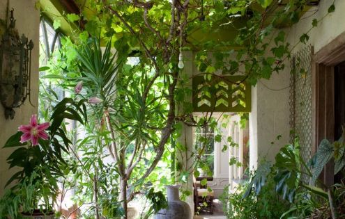 Garden room filled with plants + Photographs By: James Fennell for the