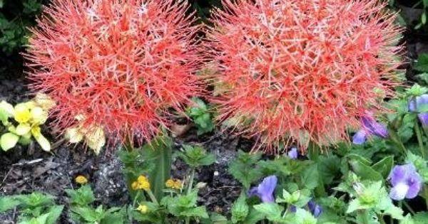best garden ideas pictures - 10 Best Florida Shade Plants garden ideas