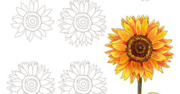 Dessin tournesol fleur dessins esquisses bullet - Comment dessiner un tournesol ...