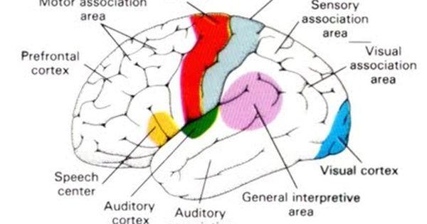 Functional Neurology Neurology Medical Quality Care