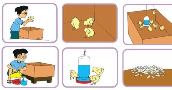 Contoh Gambar Ilustrasi Kandang Ayam Pembelajaran 3 Subtema 4 Menyayangi Hewan Mikirbae Com Perencanaan Pembuatan Kandang Ayam Tom Kartun Gambar Kandang Ayam